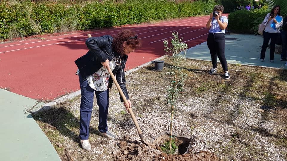 Piantumazione albero di Ulivo